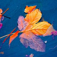 Letting Go: A Sacred Task