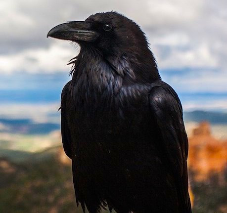 Blackbird, Fly