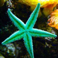 Starfish Medicine